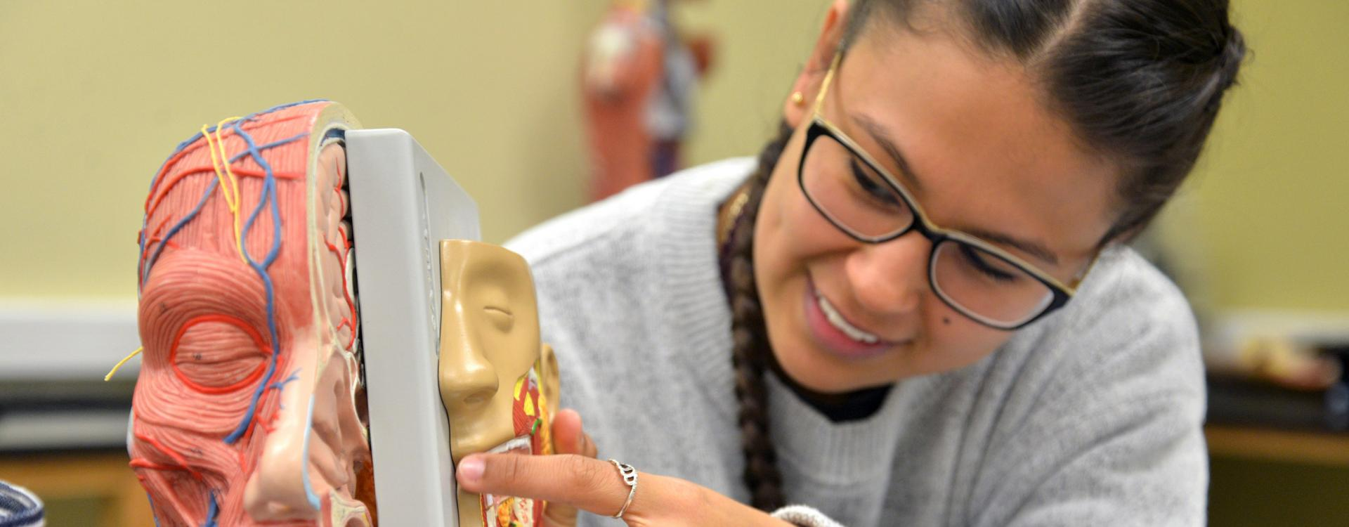 A Durham Tech student in biology lab looking at model of human head.